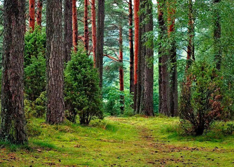 Evento deportivo para reforestar bosques