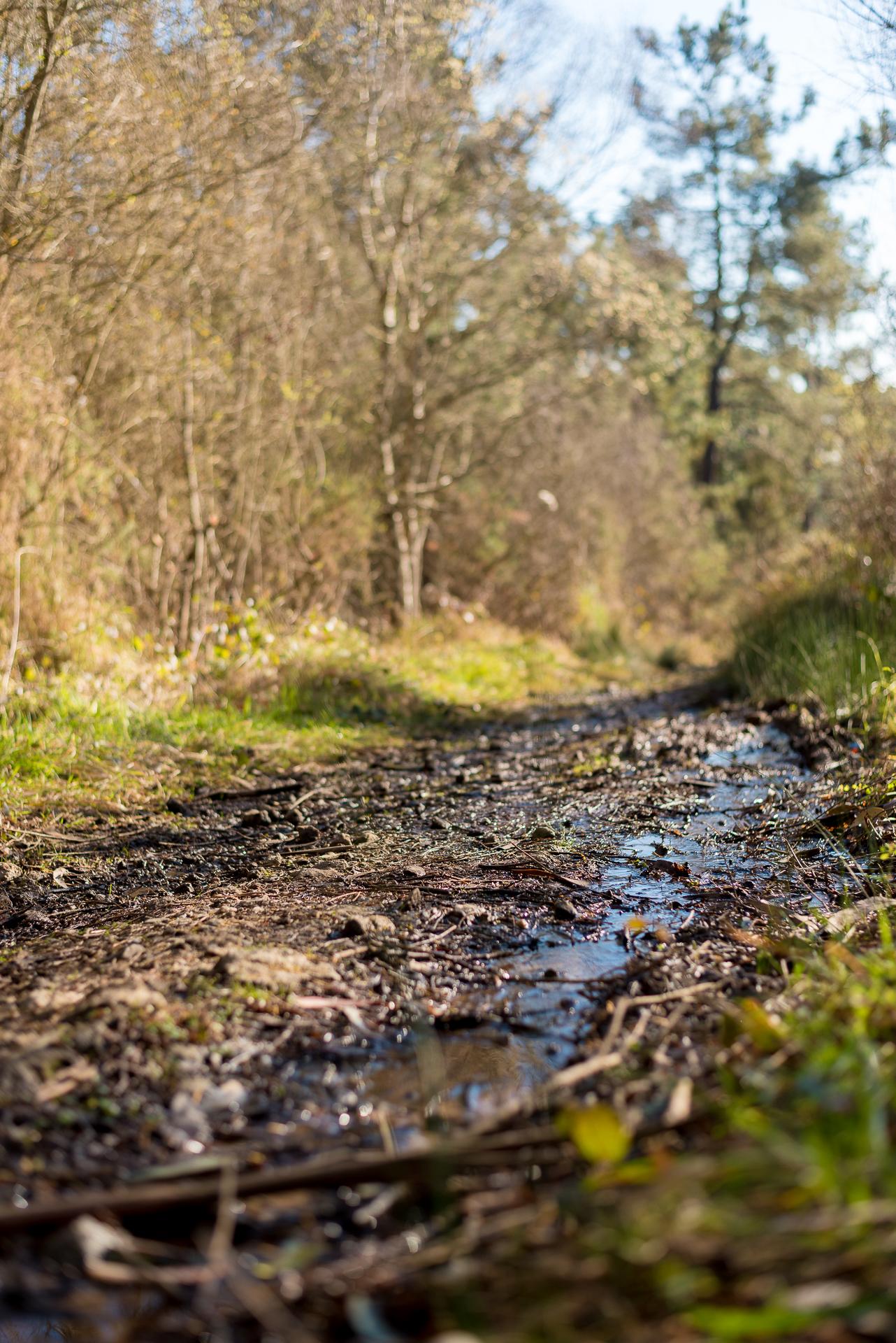 Actitude Eventos Concurso Fotográfico Trail Gijon